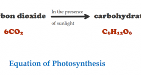 Process of Photosynthesis: 5 Advantages For Humans